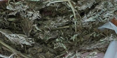 U 31-latka znaleziono 440 gramów marihuany. Grozi mu 3 lata więzienia